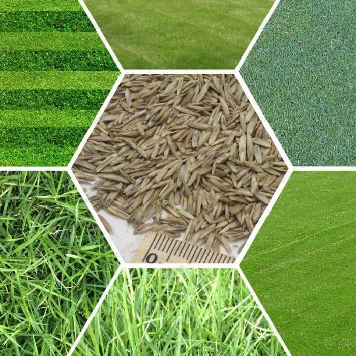 Различные виды газонной травы